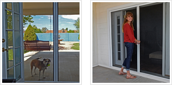 Marvelous Dog And Woman Standing In Screen Doorway